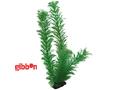 Plastväxt Egeria Hobby