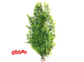 Plastväxt Bamboo Flexible Maxi Sydeco