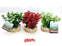 Plastväxt Bioaqua Bouquet Sydeco