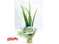 Plastväxt Bioaqua Grass Sydeco