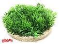 Plastväxt Green Moss Sydeco