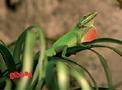 Lysrör Reptistar UV-B 5% T8 Sylvania