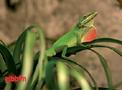 Lysrör Reptistar UV-B 10% T8 Sylvania